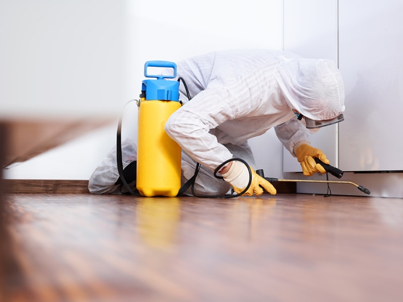 Top 10 Pest Control Services in Pune | Safe & Certified Chemicals - Urban  Company